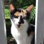 gatito con manchas en adopcion