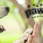 Banner-pawise_1