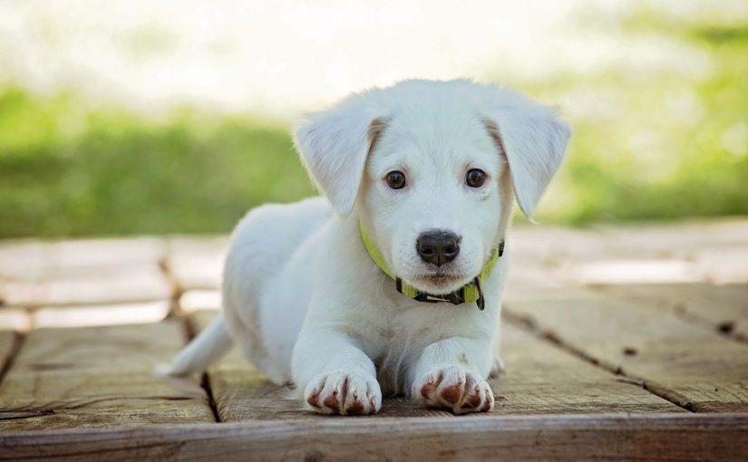 Foto cachorro