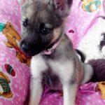 Gasha perra adopcion