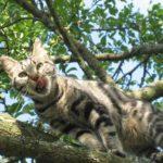 Gato en arbol1