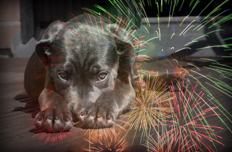 Mascotas Ya Alimento y accesorios para perros y gatos online