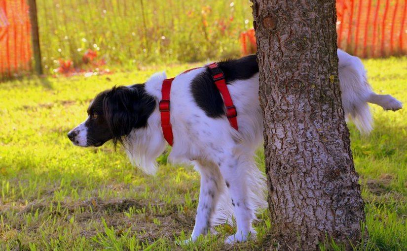 Perro macho levantando la pata