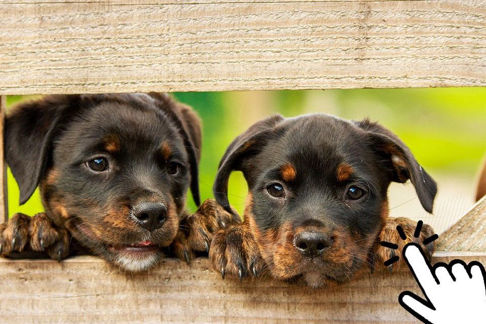 publicar adopcion mascotasya