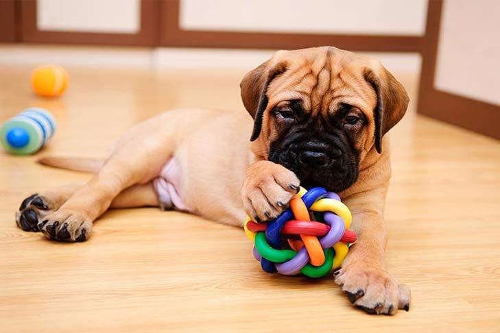 cachorro juguetes