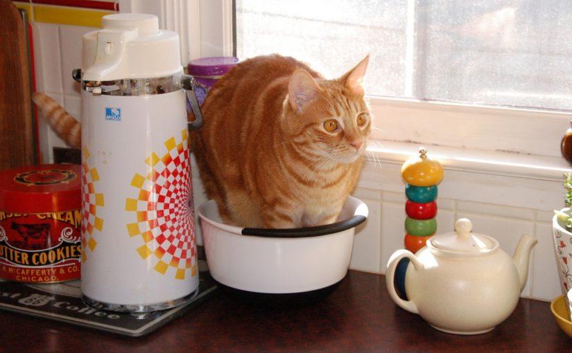 gato limite meson