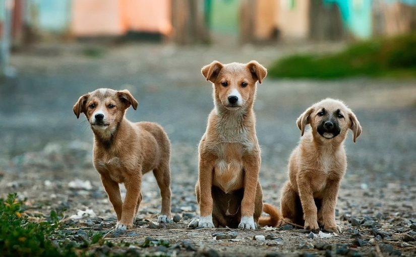perro adoptar cachorros