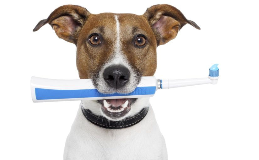 higiene dental perro