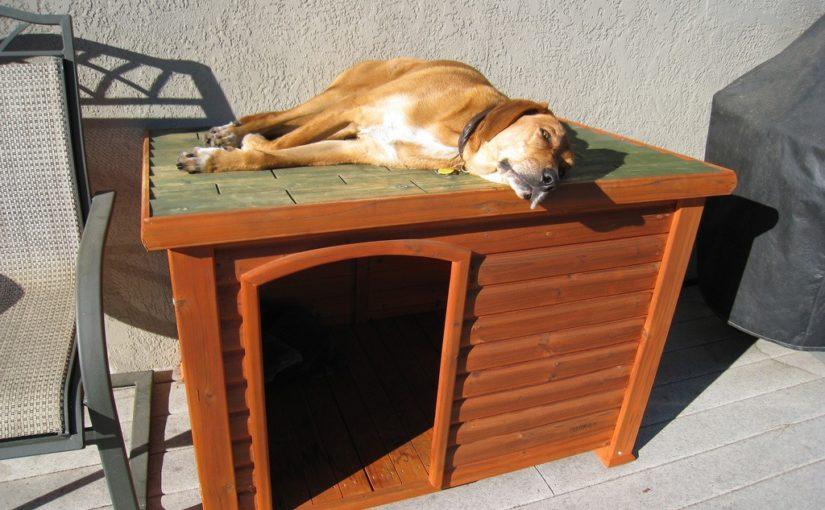 perro nueva casa