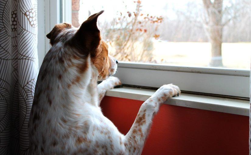 perro esperando