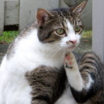 Gato rascandose