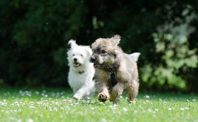 restaurar amistad perros 2