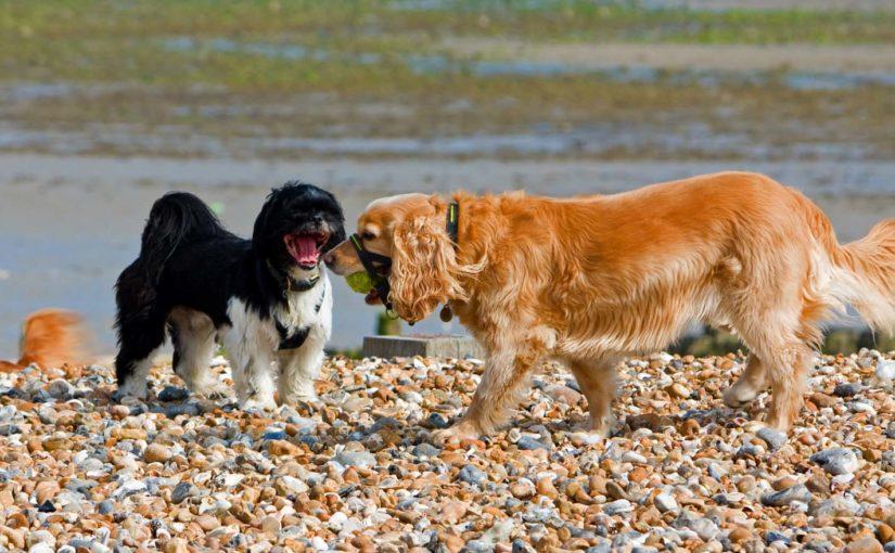 restaurar amistad perros
