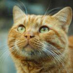 cat-2314325_1920