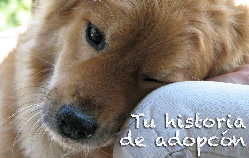 historias de adopcion