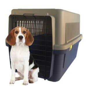 kennel cooper mascotas 1 con peroo