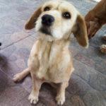 perri adopcion 1