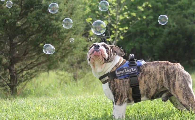 perro burbuja pixb
