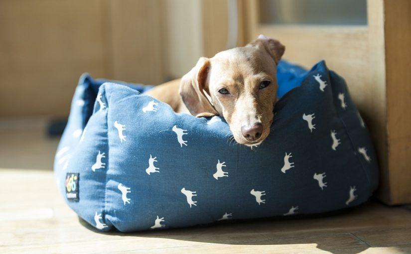 como saber si perro fiebre