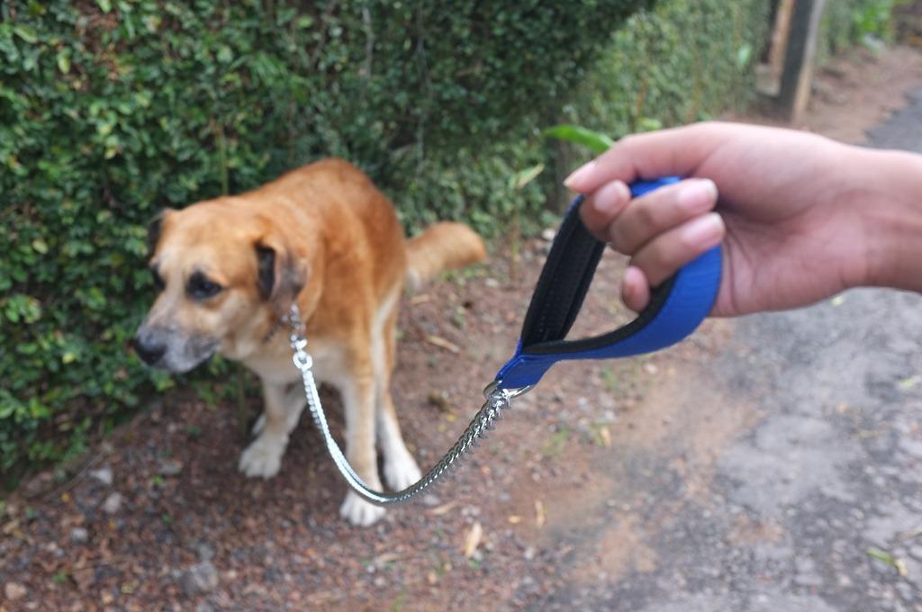 perro haciendo necesidades