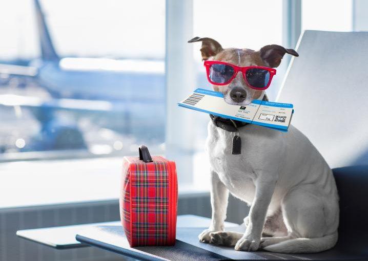 requisitos viaje mascotas