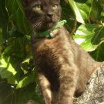 simon gato adopcion